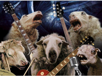 Ovcie kiahne